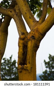 tree that looks like a man yelling.  Like a magic spell turned this man in to a tree. conceptual piece