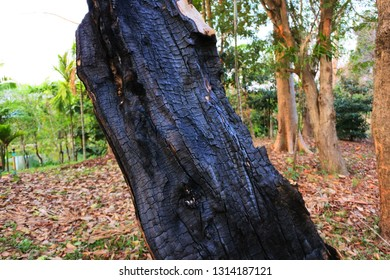 The tree that was struck by lightning