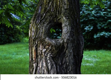 A tree with a through hole: close up