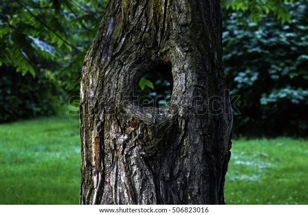 tree-through-hole-close-600w-506823016.j
