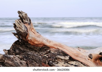 Tree thrown out on seacoast. Influence of waves, sand and a wind