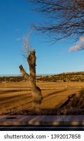 Tree thunderstruck by the storm that revies, region of Avila, Castilla y Leon, Spain