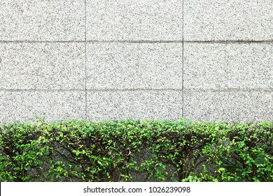 Tree with tile wall