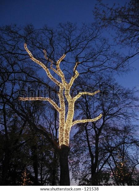 A tree in the Tivoli in Kobenhavn