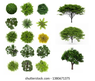 Tree top view Plan Layout on white background