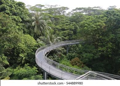 Tree Top Walk, Tropical Rainforest, Southern Ridges, Singapore