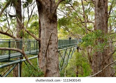 Tree Top Walk in Valley of the Giants - Walpole - Australia