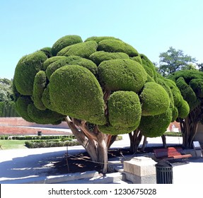 Tree with topiary art