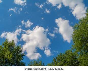 Tree tops fram this blue sky with puffy clouds image.