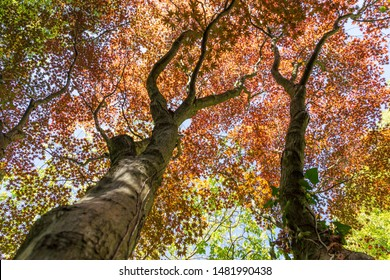 Tree tops, light fixtures in autumn, colorful colors
