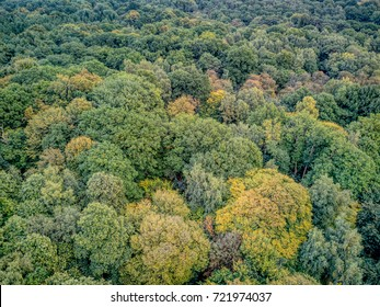 Tree tops at the start of Autumn - South weald Park near Brentwood, Essex