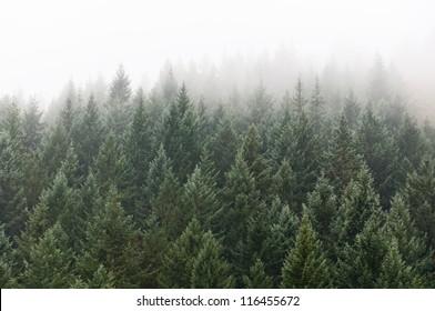 tree tops texture