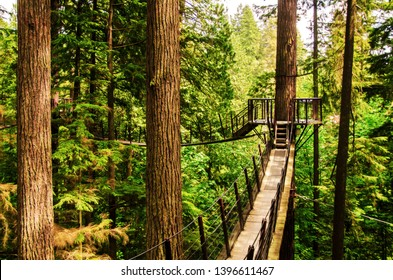 Tree tops walk with suspension bridges between trees, Capilano Vancouver