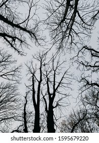 tree tops without leaves in the forest
