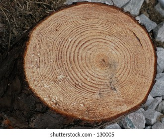 tree trunk after being cut