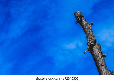 Tree trunk against blue sky