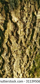 Tree trunk background or texture.