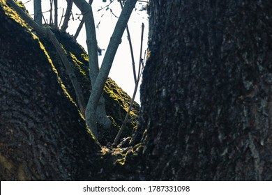 tree trunk and branches around which sunlight falls