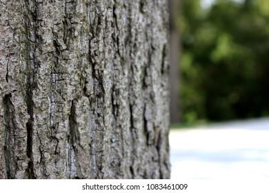 tree trunk close-up in park in prague in czech republic