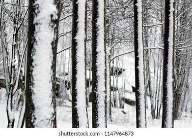 Tree trunk covered by snow