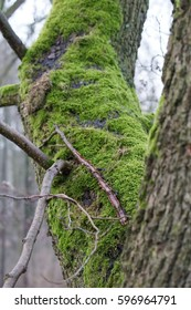Tree trunk covered in moss