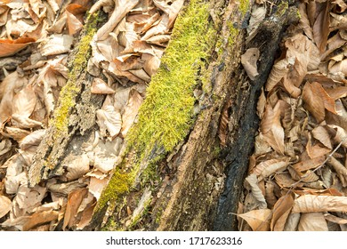 tree trunk covered with moss in forest