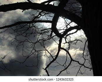 Tree trunk, crooked limb and branches with dark gray billowy clouds and sun peeking thru