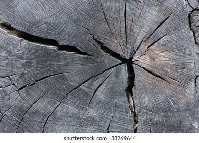 Tree trunk cross section background texture