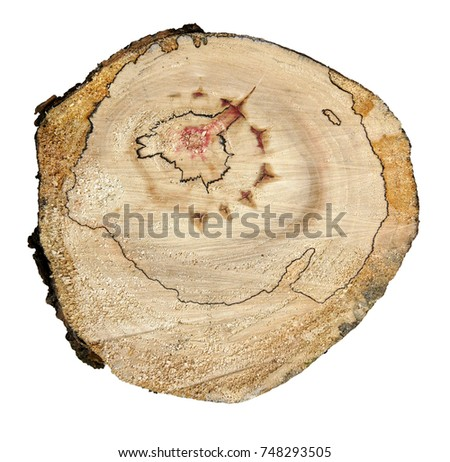Tree Trunk Cross Section Fancy Natural Stock Photo Edit Now