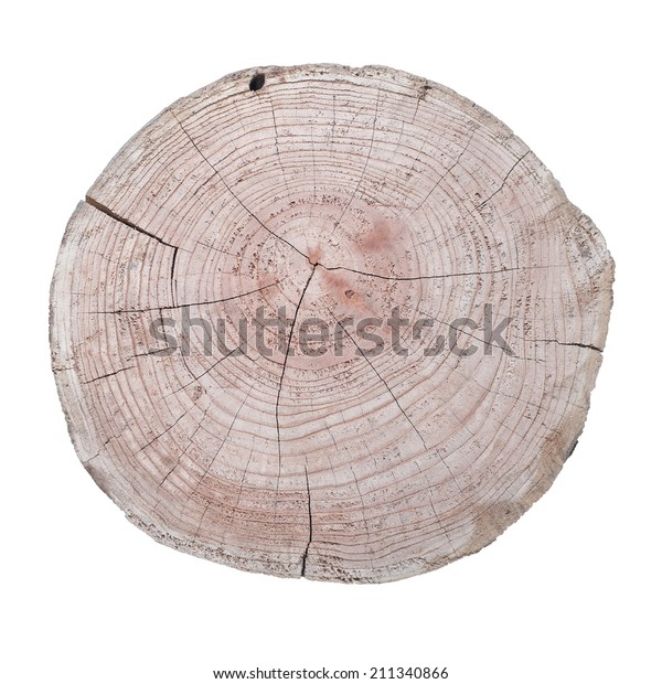 Tree Trunk Cross Section Isolated On Stock Photo Edit Now