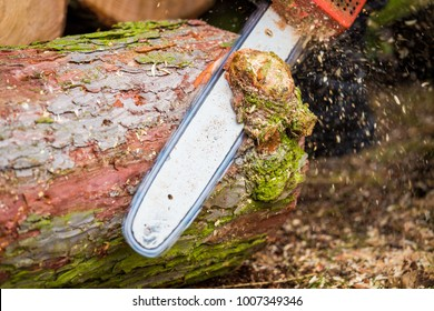 a tree trunk is cut with a chainsaw