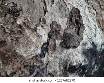 Tree trunk decay