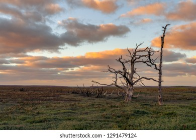 A tree trunk in the evening light over the Porlock Marshes, Somerset, England, UK