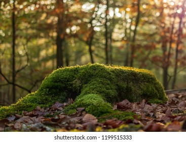 tree trunk full of moss at fall season with a colorful forest background