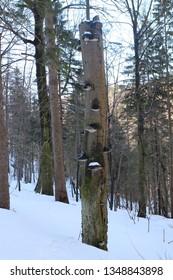 Tree trunk with fungus in canyon Jánošíkove diery in Malá Fatra mountains, Slovakia