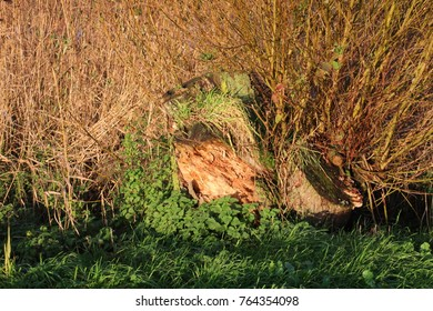 Tree trunk with grass and moss on it in morning sun