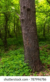 Tree trunk in a green forest