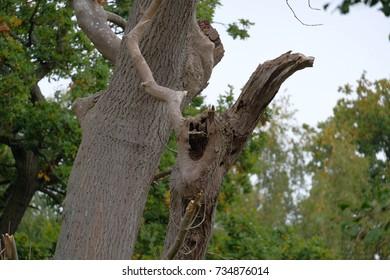 tree trunk hollow