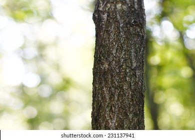 tree trunk isolated from background