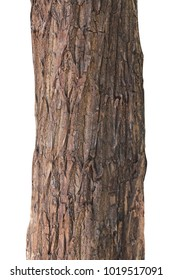 Tree trunk isolated on white background.