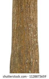 Tree trunk isolated on white background and with clipping path.