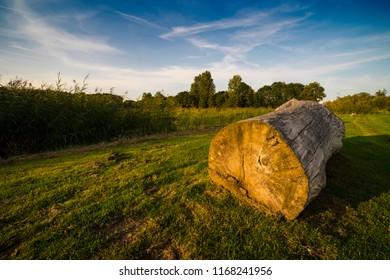 tree trunk laying in field, national park Biesbosch, Dordrecht, The Netherlands
