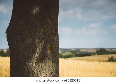 Tree trunk with lichen