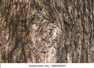 Tree Trunk with Melancholy Character in Center of Bark. Bright Sunshine Flecks. Stories of Old Forest. Wood Background with Copy Space. Bluesy Wood Mood.