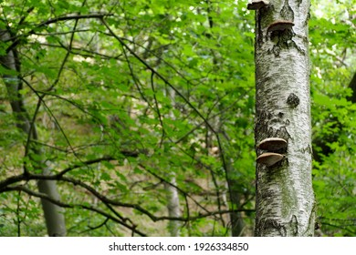 tree trunk with mushrooms growing on it in the forest side view