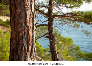 Tree trunk on a background of the sea. Pine forest.