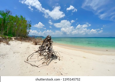 Tree trunk on the beach of Koh Poda with the Ao Nang bay in the background, Krabi province, Thailand