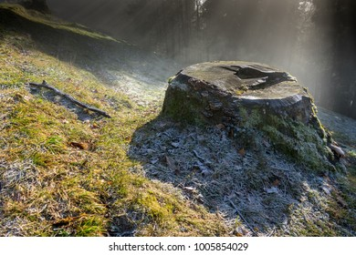 tree trunk on the sunny glade