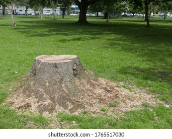 Tree trunk in the park