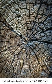Tree trunk patterns